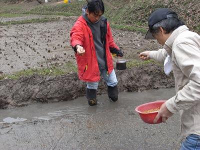 うるち米のたね吉くんを蒔きます。床の色がうっすらと種色に変わります。パラパラと、種が土に着地する音が聞こえます