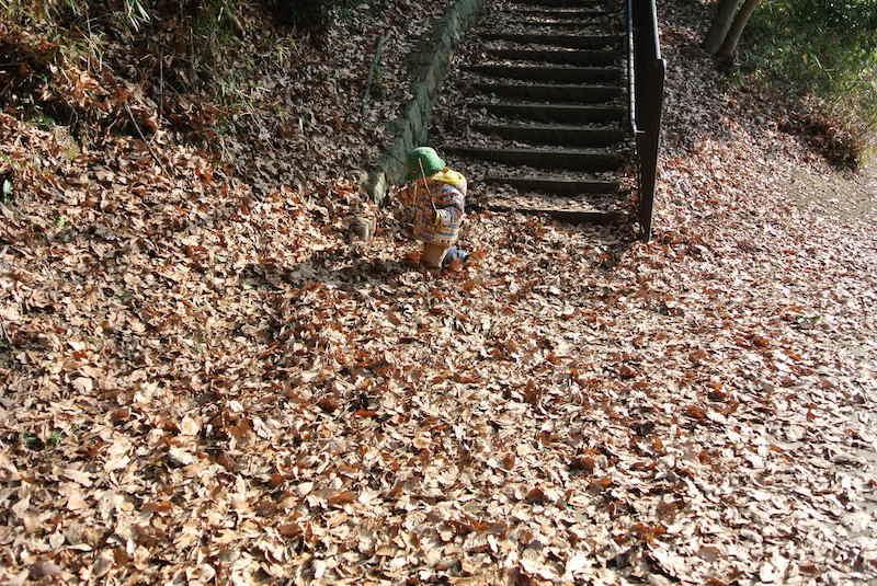 ここにも落ち葉がいっぱい!この日の目的地はこの階段の上!! 階段を上っていくとまた違った雰囲気の空間が広がっていました