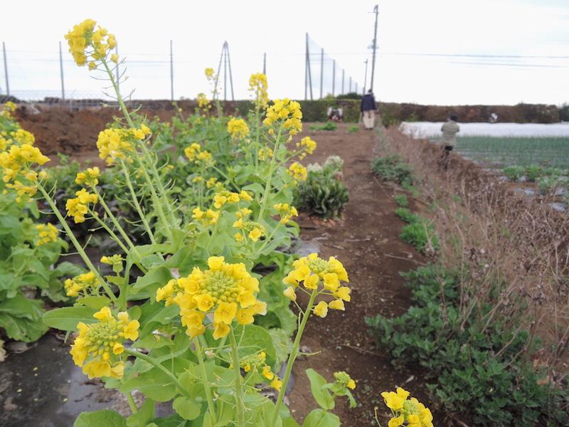羽沢町の台地の上に広がる平本さんの畑。空が近い