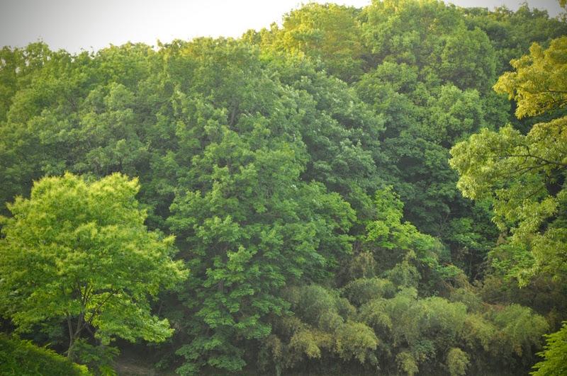 ざわざわざわと次第に波をうつように揺れる木々がまるで『となりのトトロ』のワンシーンのように美しく、私はしばらく眺めていました。
