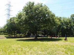 大きなけやきの木。気持ちの良い木陰を作ってくれ、雨宿りもできる懐の大きな木