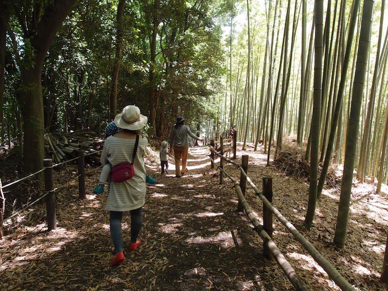 美しい竹林。都筑区はもともと竹林が多かったそう。公園愛護会の方々に大切に保護されている