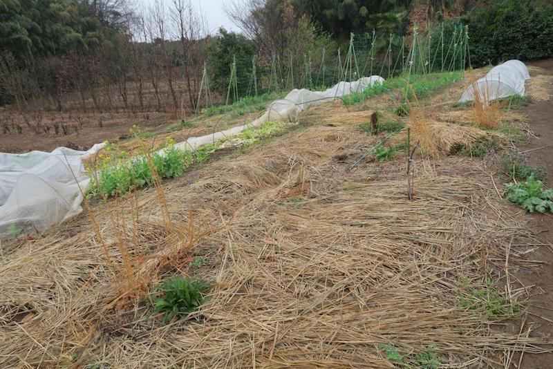 「自然栽培とは土に何も入れない無肥料、無農薬栽培のことです」と角田さん