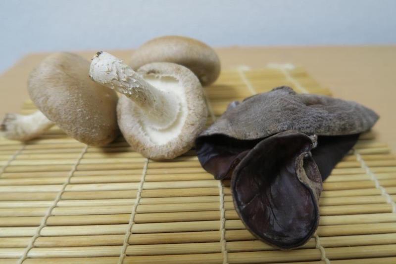 左からシイタケとキクラゲ。薬剤は使わず栽培されている
