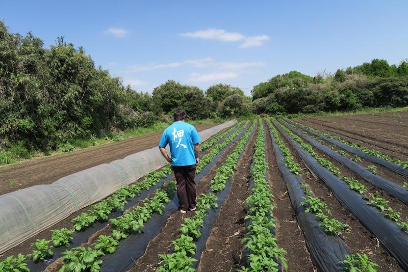 ジャガイモ畑も見学。ジャガイモも6品種を栽培。