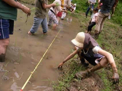 田植えの天使到来? 泥んこになりながらがんばってくれました!