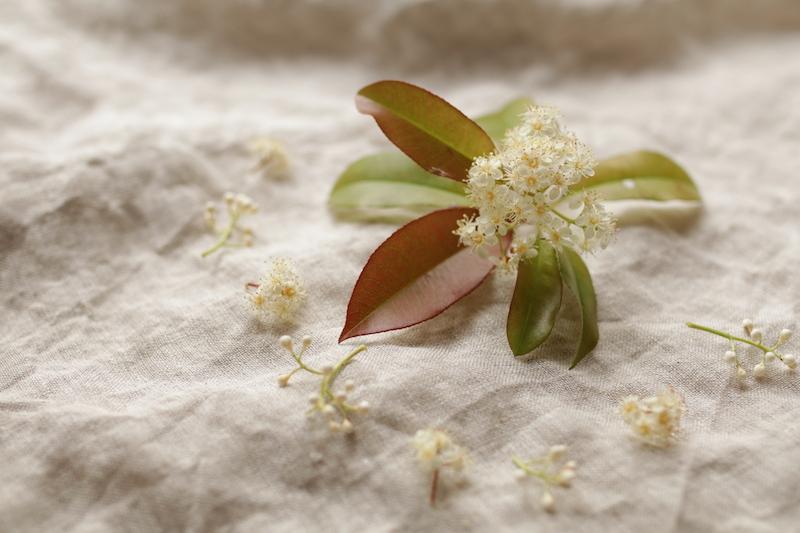 緑や赤の葉と可愛らしい蕾と小花できれいな色と模様を映し出してくれたレッドロビン。