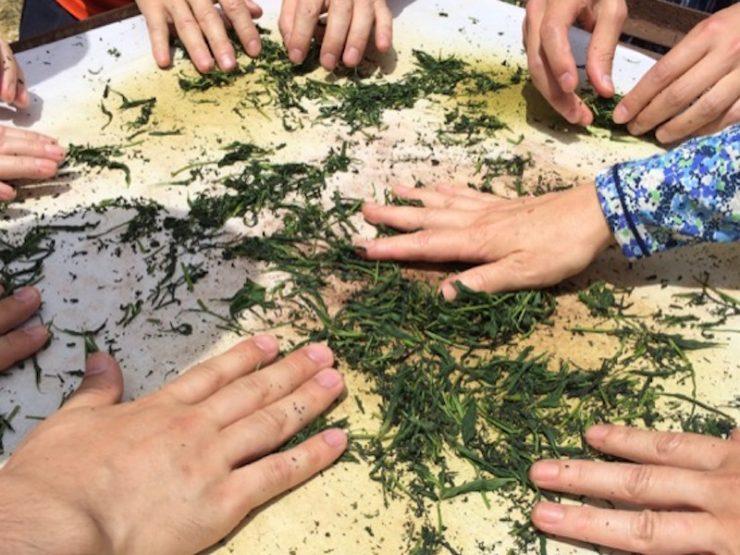 茶葉はせいろで一気に蒸しあげ、和紙を敷いた鉄板のうえで、素手で撚る。結構熱いが、意外と慣れるもので、最後の方には子どもも楽しんでいる