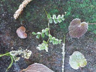 七十二候では10月23日が霜始降(しもはじめてふる)。霜が降りた、というのも季節の移り変わりを知る、自然からの大切なお便り