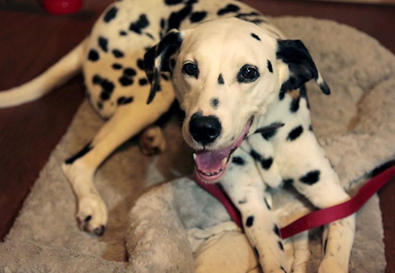 沢田さんの愛犬で看板犬のサラン(韓国語で愛の意味)。ほかにもうさぎ1匹、犬1匹の姿があり、アトリエの空気を和ませてくれている