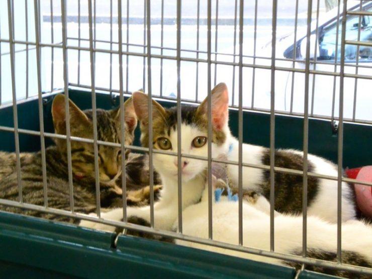 横浜 猫 里親 譲渡動物情報《猫》 横浜市