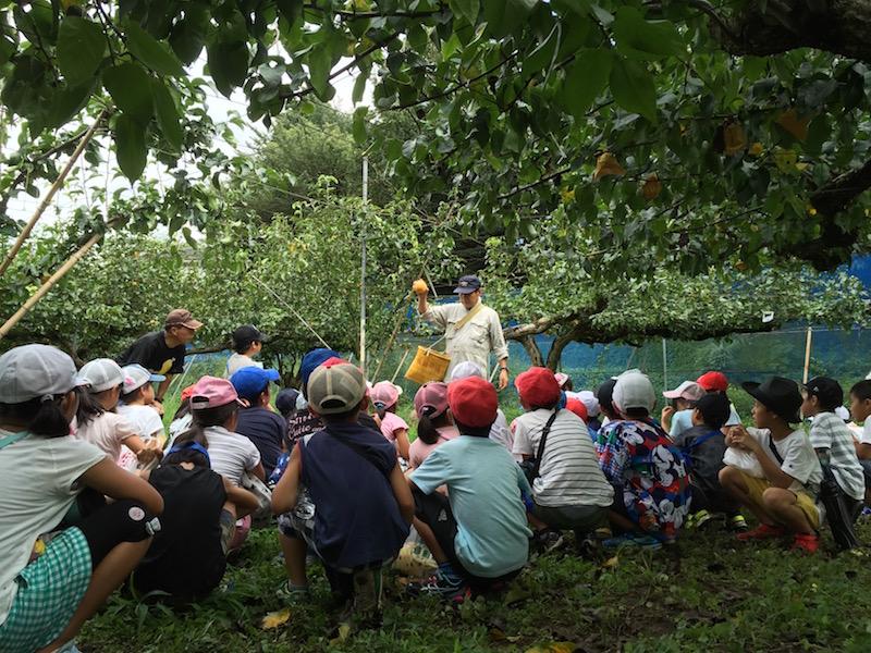 子どもたちは季節ごとに農園を訪れ、梨の成長を観察する