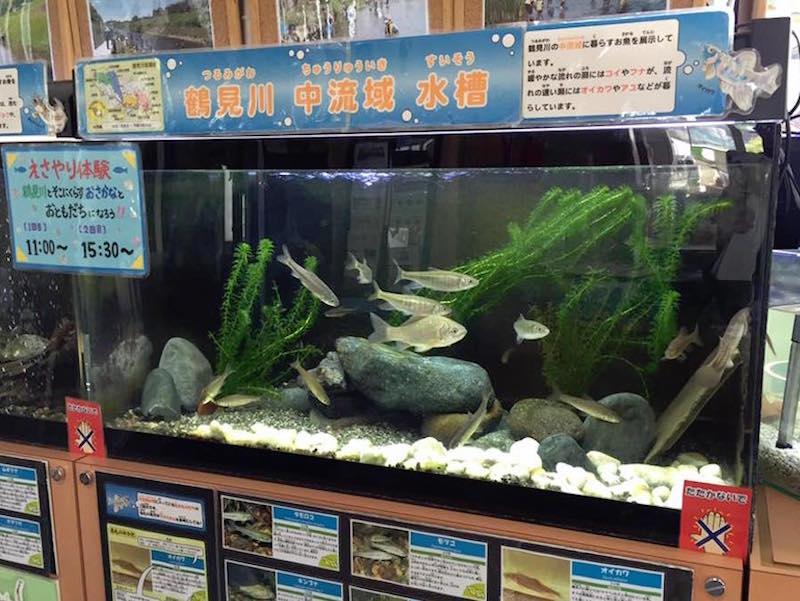水族館コーナーには、ヨシノボリ、オイカワ、ボラ、メダカといった小魚、エビやカニ、ドジョウなどがいて見飽きない。鶴見川は実は生き物にとっても居心地のよい住処で、え? ここに? という意外な魚も観測されている