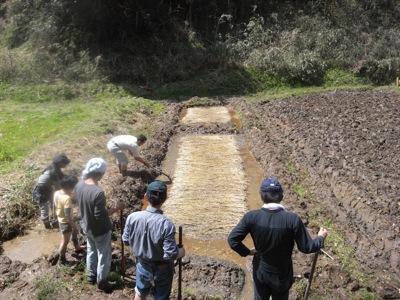 一週間前にまいた稲の種を確認。土壌のさびを流すため、水を鍬でほんの少しかき混ぜます
