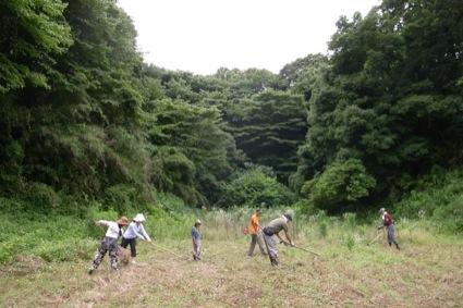 手で草取りするには広大すぎるどんぐり農園の畑です。  草刈り機がない人は、熊手や鋤で草を集めていきます