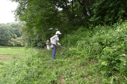 ほとんどケモノミチ状態だった土手を、Aさんが歩きやすいように草刈りしてくれました!