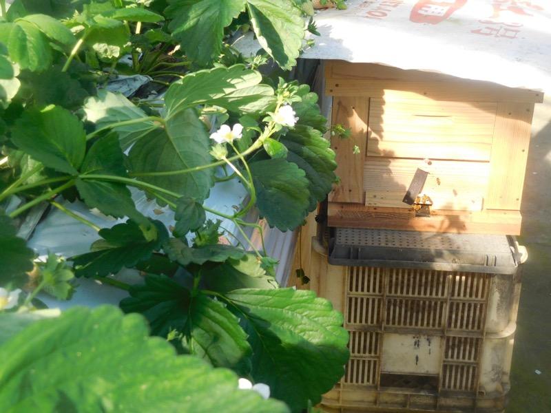 苔玉の作品も工房の窓際に飾られていた