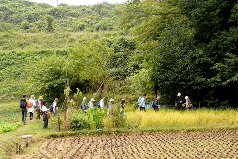 谷戸の3大要素、雑木林、田んぼ、小川を確認しながら歩く参加者たち。最近は特に田んぼがどんどん減ってしまっているというが、この日の谷戸では、黄金色に実った稲をたくさん見ることができた